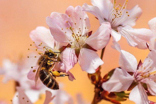 polinización de abejas