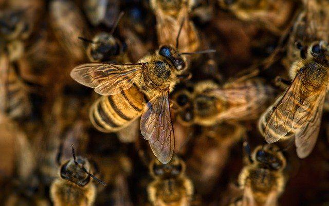 un enjambre de abejas